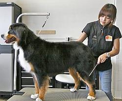 la-dogworks-grooming